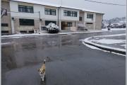 Σχολείο ... στα χιόνια (16.01.2021)